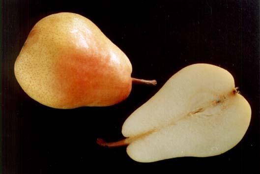 Болезни грушевого дерева